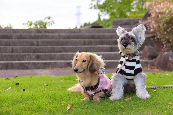 お座りする犬たち