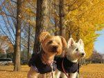 2頭で公園を散歩する犬