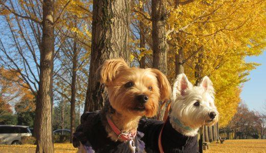 練馬区ペットシッター活用法|おすすめ犬の散歩代行コースはココ