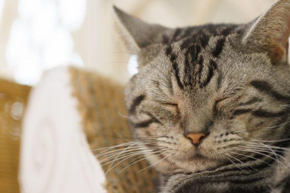 目をつぶる子猫