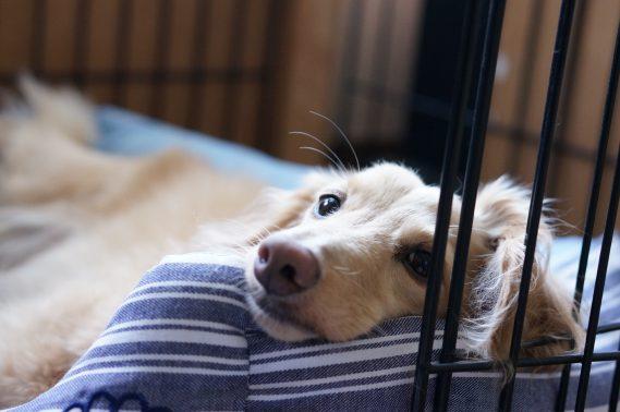 落ち着いている犬