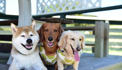 犬の多頭飼いで悩みの方に散歩代行を薦めるホントの理由!