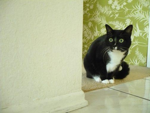 びくびくしている猫