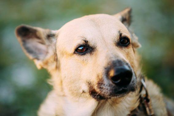凛々しい姿の犬