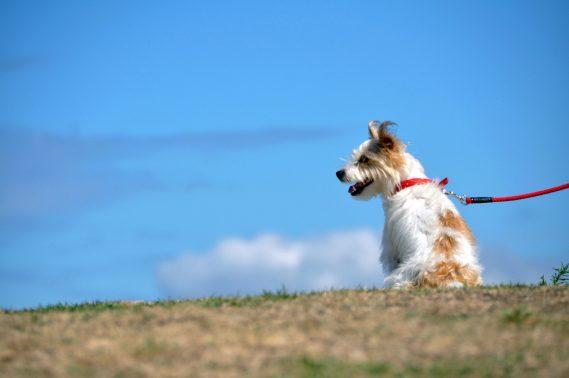 河川敷を歩く犬