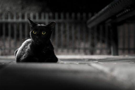 暗闇に佇む猫