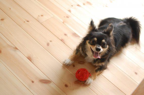 遊ぶことが好きな犬