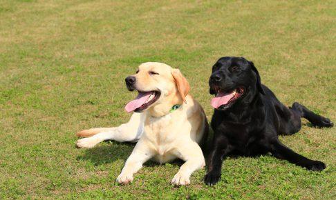 仲が良い大型犬