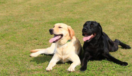元気な大型犬の多頭飼いで起こる問題は犬の散歩代行で解決!?