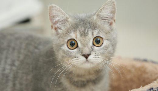 【世田谷区のペットシッター】猫ちゃんの料金どれくらいかかる?