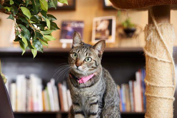室内にたたずむ猫