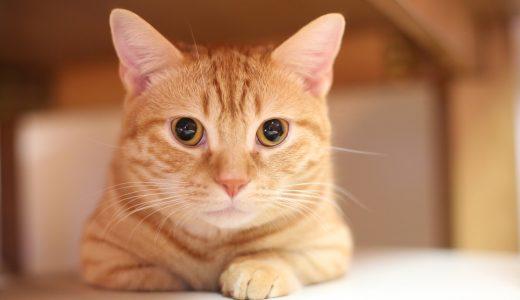 預ける時に考えよう!猫ちゃんがどうしても抱えてしまうストレスとは?
