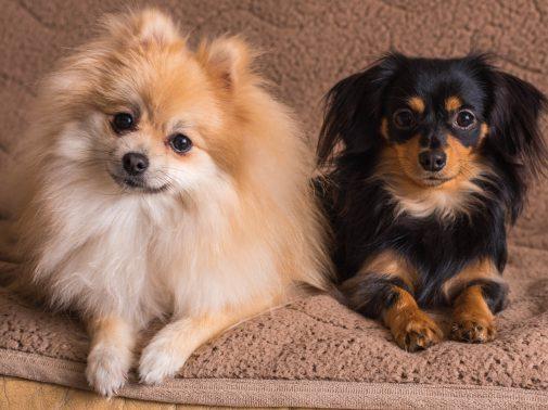 仲良しな2頭の犬
