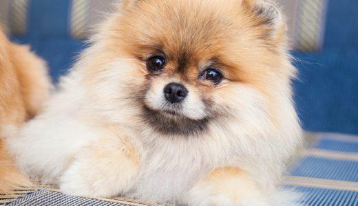 一人暮らしで犬を留守番させるなら|都内で安全に預けたいあなたの選択肢