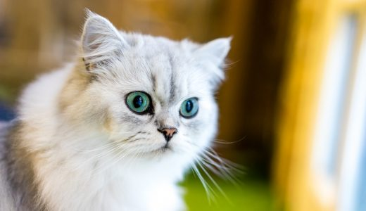 愛猫のトイレ用品を選ぶ際のポイント・ペットシッターのおすすめ