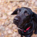 飼い主の在宅中でも犬の散歩代行を頼む3つのメリット(プロの躾)