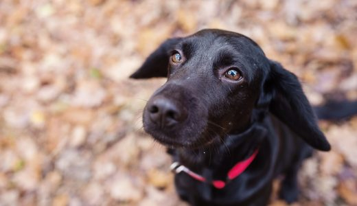 飼い主の在宅中でも犬の散歩代行を頼む3つのメリット(プロのしつけ)