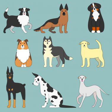 大型犬のイラスト