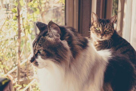 猫が増えています