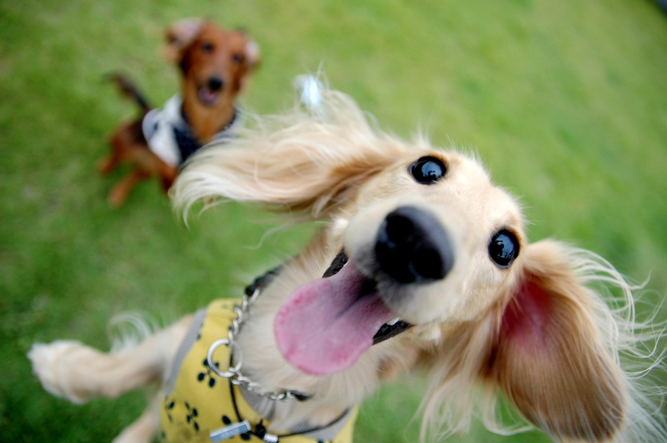 楽しげな犬たち