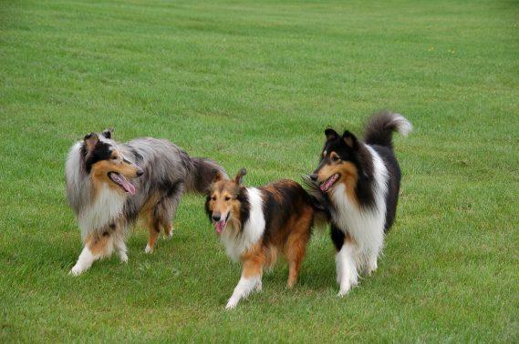 のびのび遊ぶ犬達
