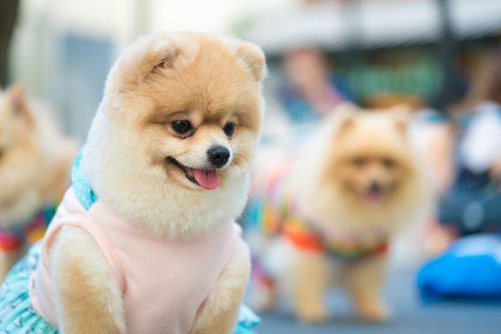 散歩にいく犬達