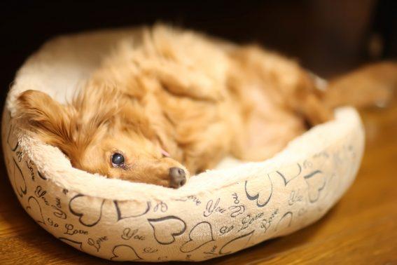 お気に入りの場所で寝る犬