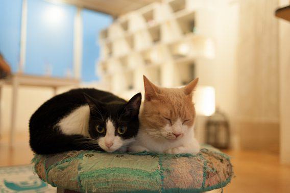 くつろぐ猫2頭