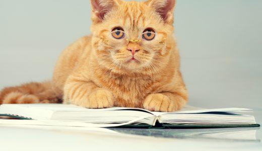 豊島区で猫のペットシッターを探すなら近隣区名でも検索を!