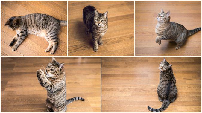 猫が室内で遊ぶ