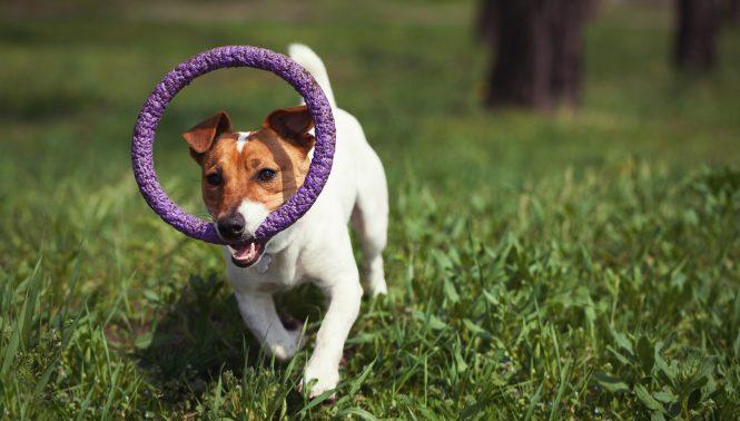 公園で遊ぶ愛犬