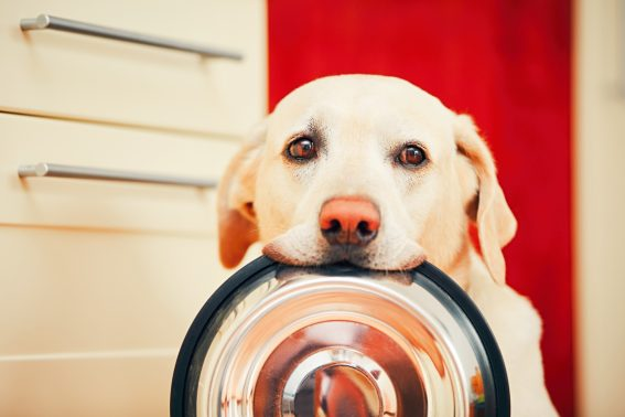 お腹が空いた犬