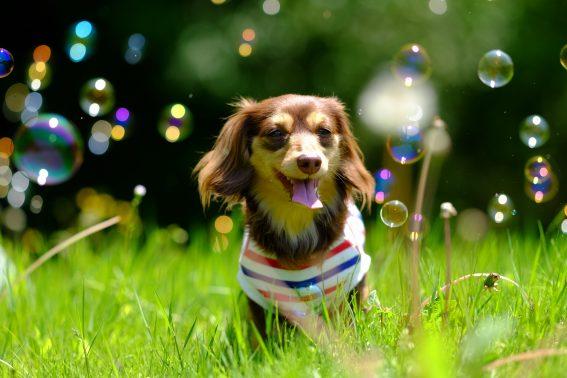 晴れた公園で遊ぶ犬