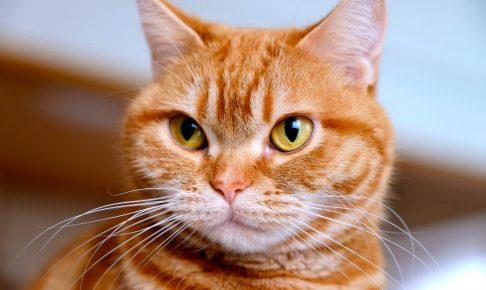 すました顔の猫