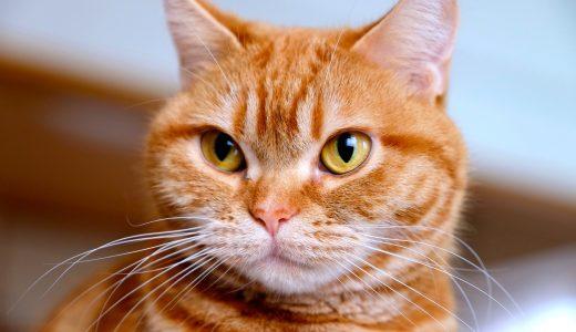 目黒区での猫のペットシッター利用の増加について調べてみた