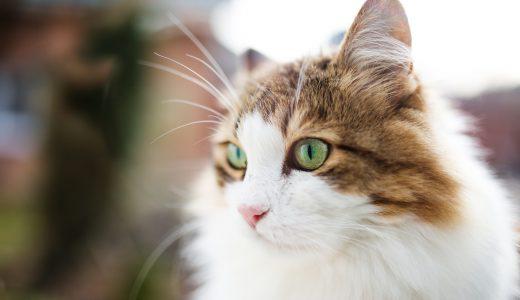 北区のペットシッター事情|【緑豊かで愛犬・愛猫にも快適性抜群です】