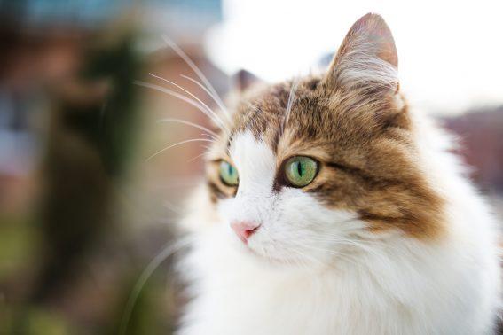 街に溶け込む猫