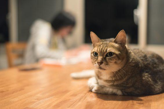 日常に溶け込む猫