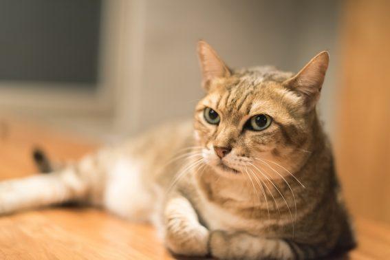 家庭に溶け込む子猫