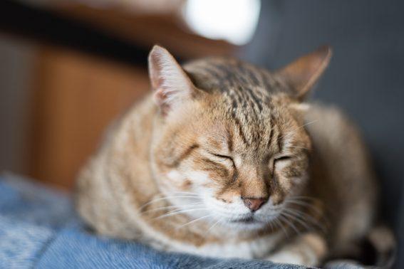 ゆったり眠る猫