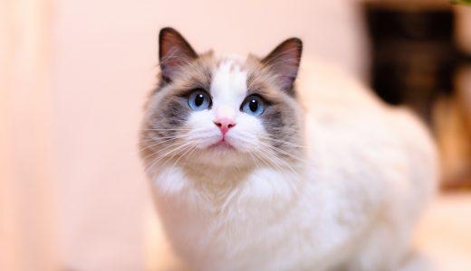ペットホテルを東京で利用する際は|猫を預ける為の7つの注意点とは?