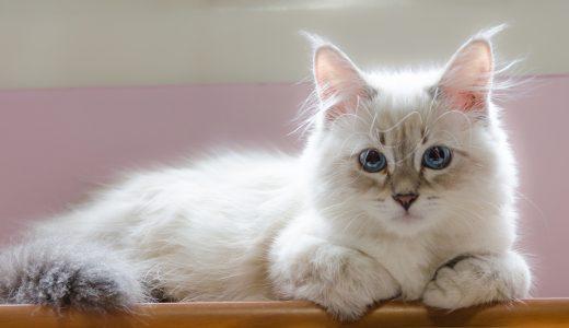 一泊旅行でも!プロが教える子猫に安全なシッターの選び方