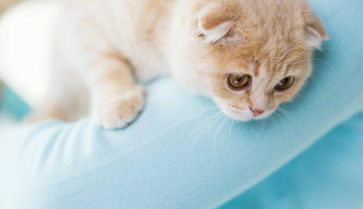 ペットシッターが活躍! 東京都杉並区に猫を飼う方が多いワケ