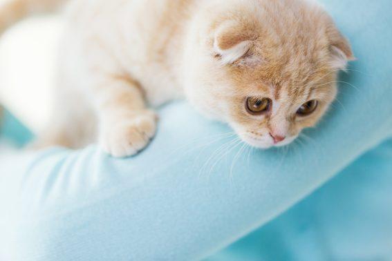 飼い主に抱かれる猫