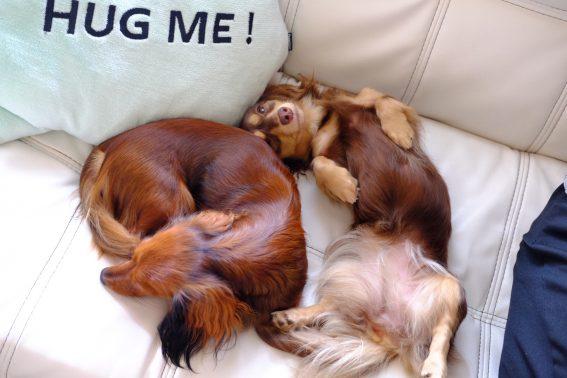 お気に入りの場所で眠る犬