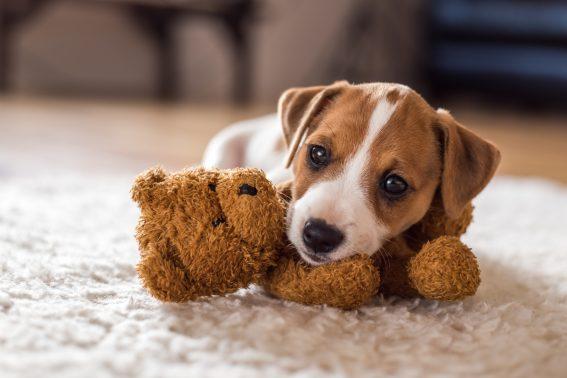 遊びに熱中する犬