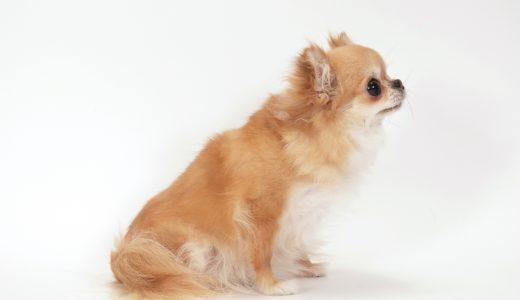 犬のしつけの相談なら自宅の様子を知っているペットシッターにおまかせ