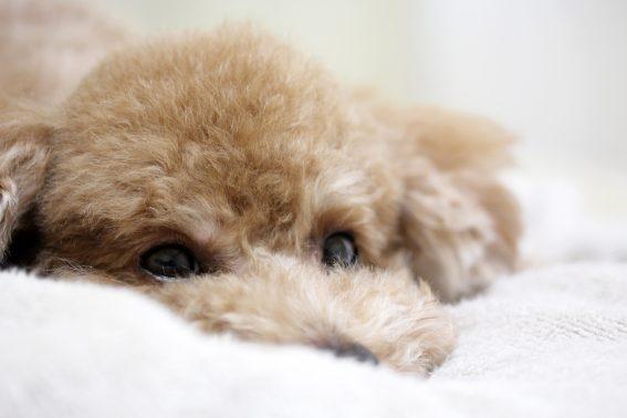 安心した場所で寝る犬