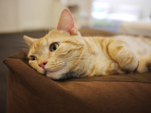 ゆったりしている猫