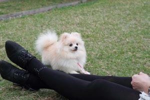 公園で遊ぶ犬と飼い主